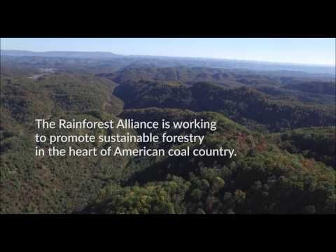 President Trump just signed legislation to repeal the Stream Protection Act. The forests of Appalachia are now in danger of total destruction. Rainforest Alliance is working to promote sustainable forestry in the heart of American coal country as an alternative to destructive mining.
