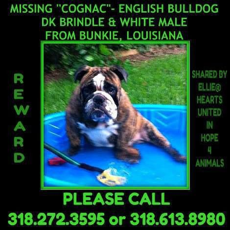 Cognac Is A Missing Englishbulldog From Bunkie La Plz Rt Reward Lost Dog Losing A Dog Losing A Pet Find Pets