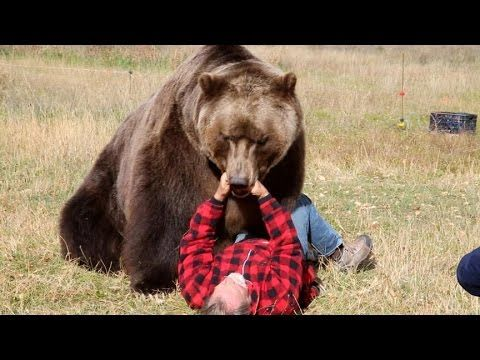 """How to Survive a Bear Attack   GMA   ABC News... Even in my VERY FIRST camping memory with MY GRANDMA LAURIE, she WOULD NEVER leave, or let us leave, the camp site without her TWO METAL POTS...would it wake up other campers?..her reply """"maybe, but a bothered camper is better then a startled bear."""" DAMN GRANDMA'S SMART."""