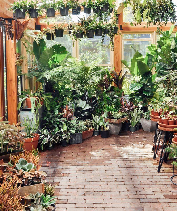 Portland Or Pistils Nursery Gardenista Tropical Solarium 2