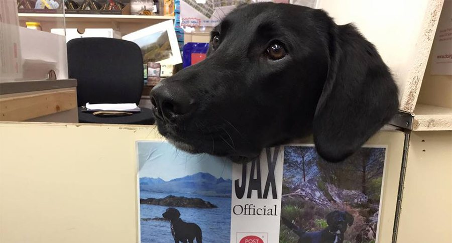 Meet Jax the Official Stamp Licker at This Scottish Post
