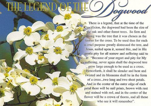 picture relating to Legend of the Dogwood Tree Printable named Legends - of the Dogwood Tree Poems Dogwood trees