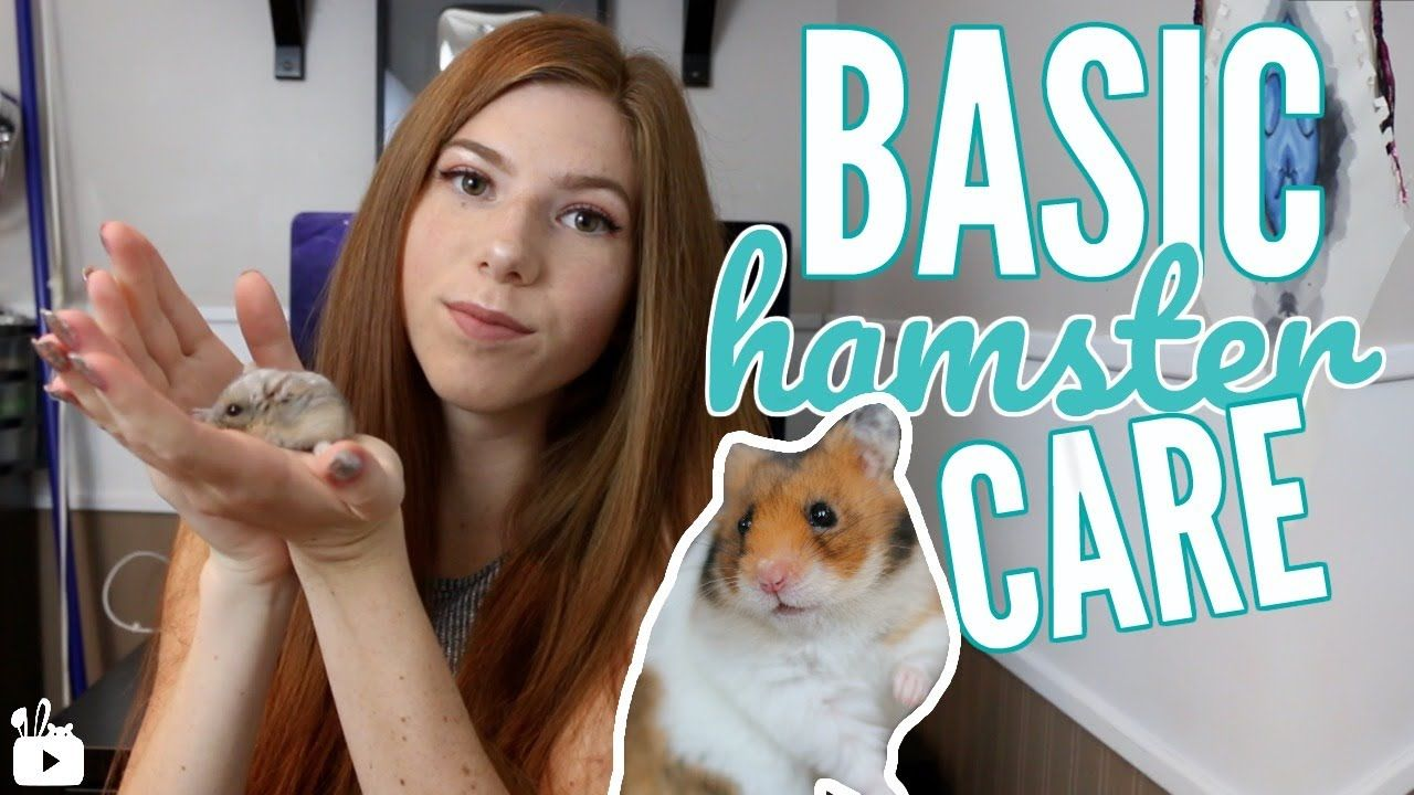 Basic Hamster Care All About Hamsters Hamster Care