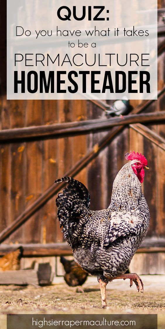 Take the quiz: Do YOU have what it takes to be a permaculture homesteader? #permaculture #homesteader #homesteading