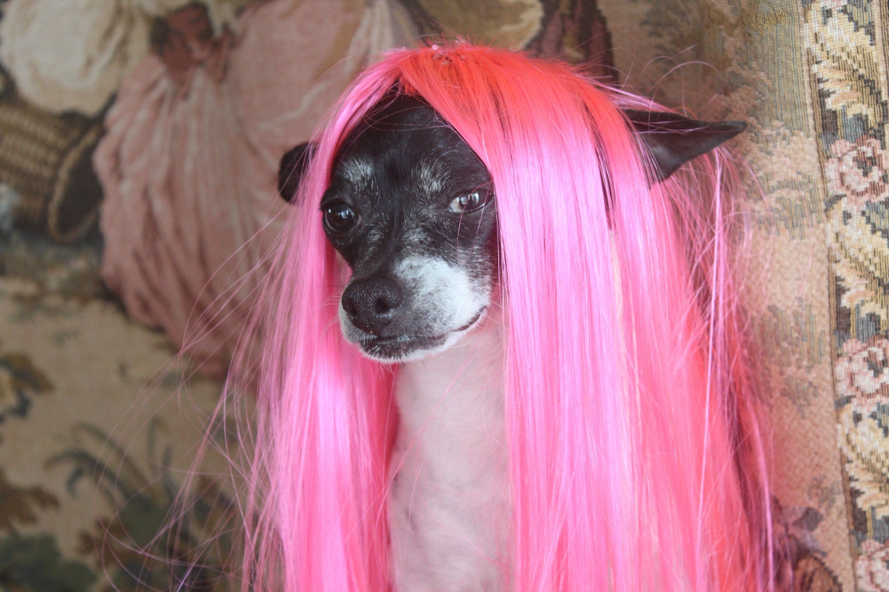 Pet wig hot pink color for dog or cat/Halloween costume | Etsy | Mood pics,  Reaction pictures, Pink dog