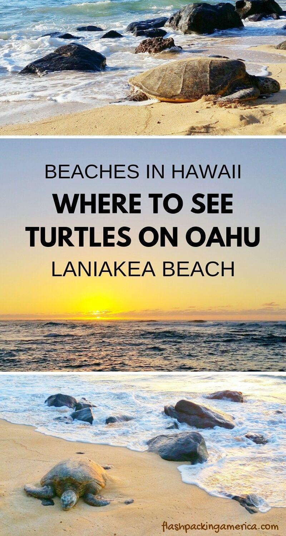 Laniakea Beach to see turtles on Oahu Hawaii 🐢 Hawaii travel blog | Flashpacking America -   #beach #BeachTravelOutfit #hawaii #laniakea #travel #turtles #x1f422