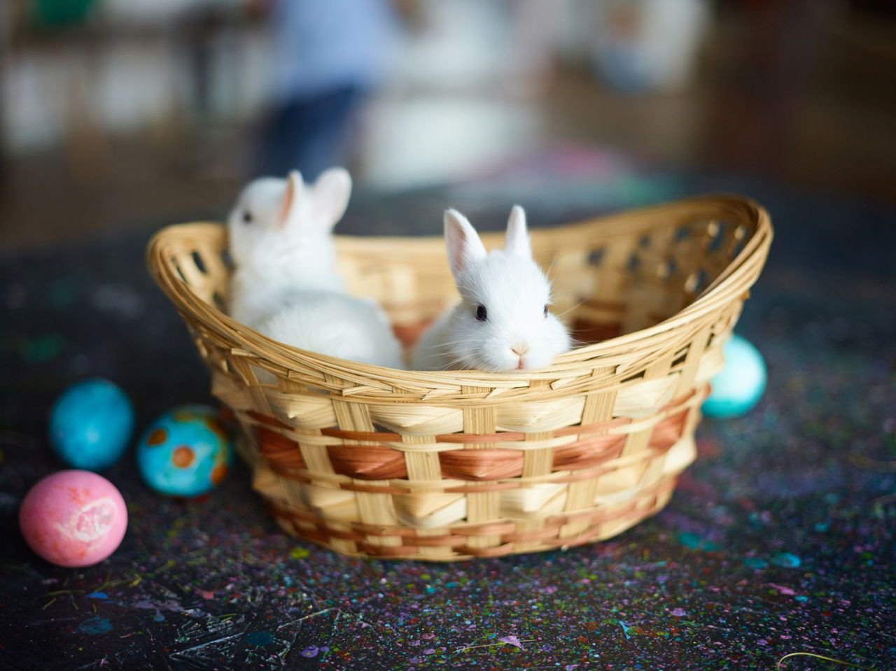 Everything you ought to know before keeping dwarf bunnies