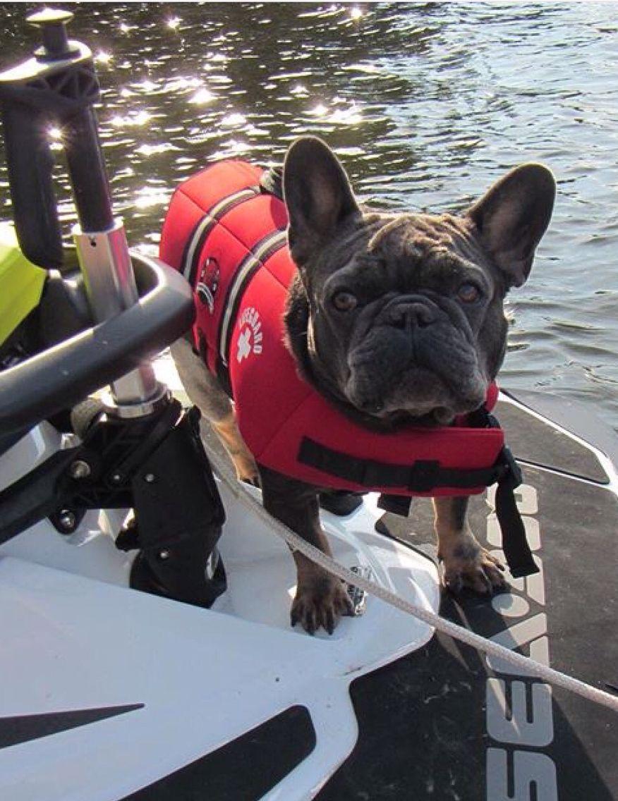 French Bulldog On A Jet Ski Summer Dog French Bulldog Bulldog