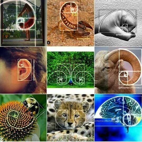 Il TERZO OCCHIO: La SPIRALE di Fibonacci & La Sezione Aurea