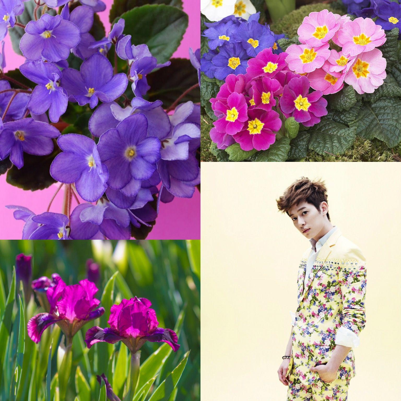 Birthflowerkpop Violets Iris Primrose Donghyun Of
