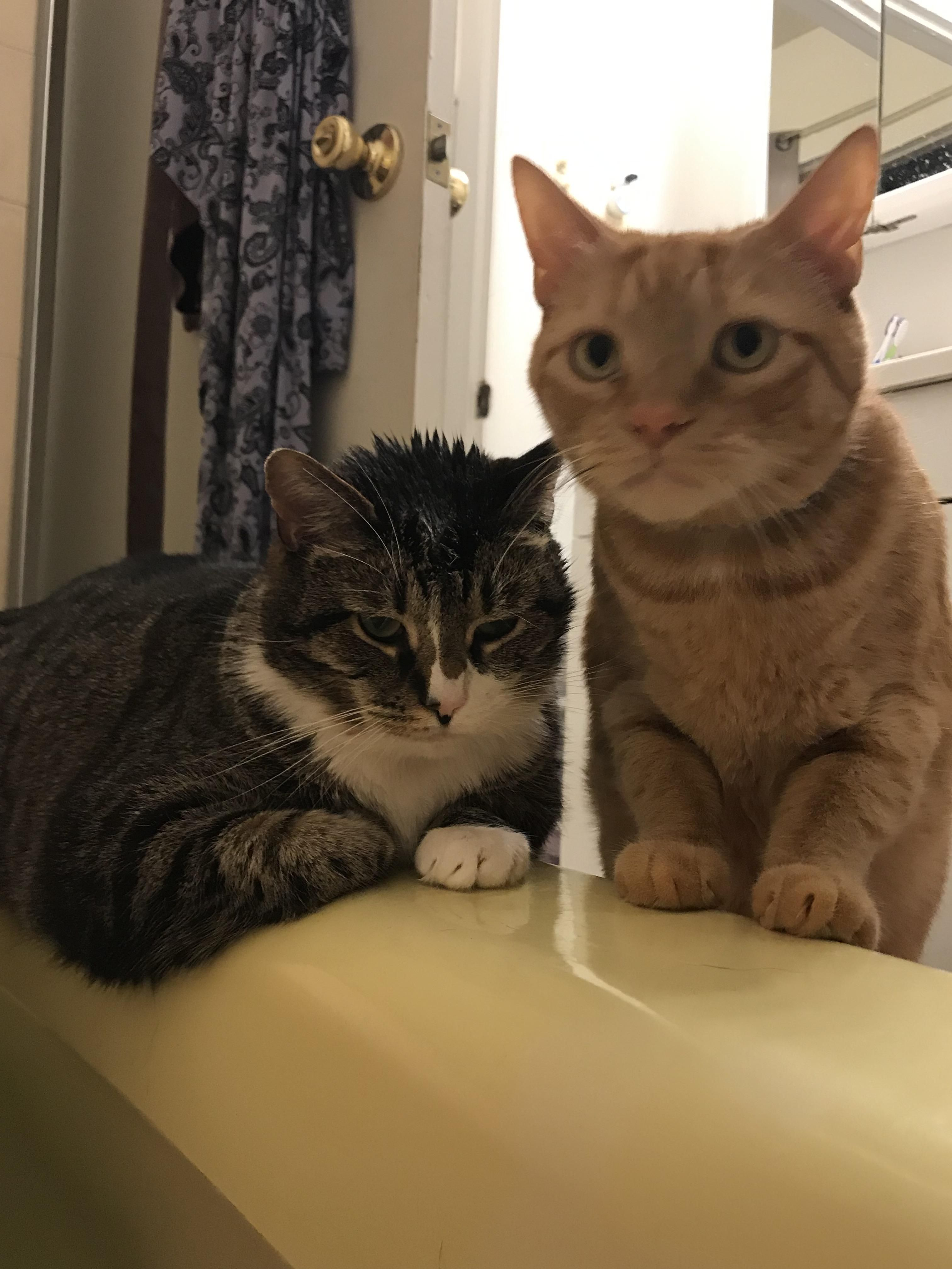 I Had A Bad Day So I Treated Myself To A Bath Thanks Remy And Titan For Making Me Feel Awkward And Better Kitten Pictures Cute Cats Cute Cats And Kittens