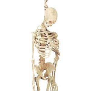 Google Express - Forum 273647 5 Feet Latex Skeleton | AUTUMN