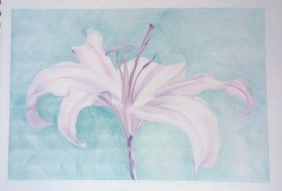 Flor lapiz
