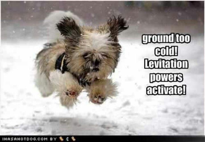 Levitation powers....activate!! | Funny | Pinterest | Cute puppy pictures,  Cute dog photos, Cute puppy photos