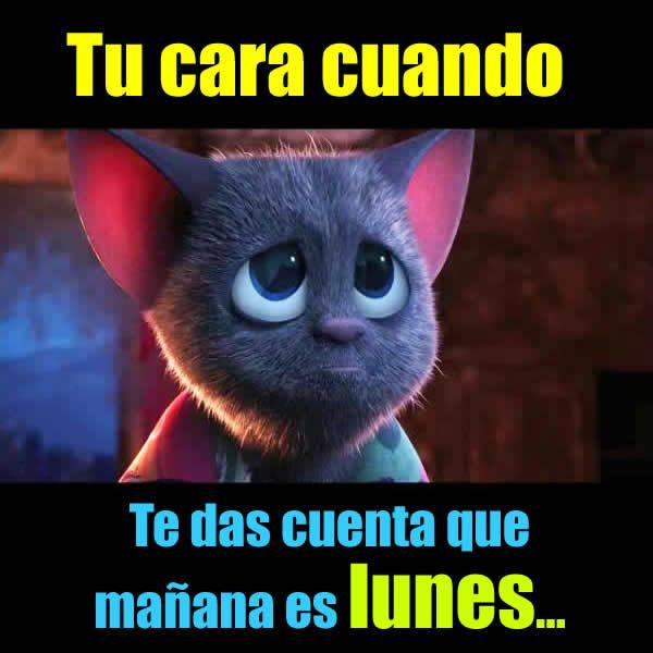 Frases De Lunes Memes De Enfermera Feliz Lunes Gracioso Citas De Enfermera