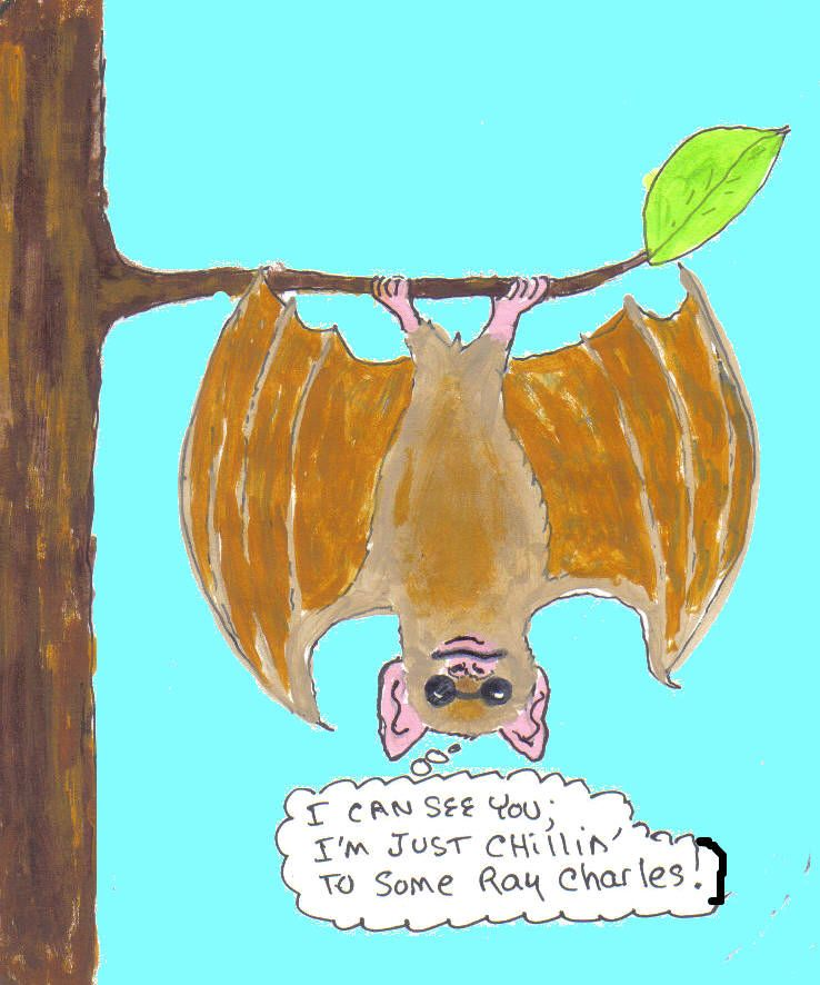 Bat Myth Bats Are Blind All Bats Can See Even Though Vision May
