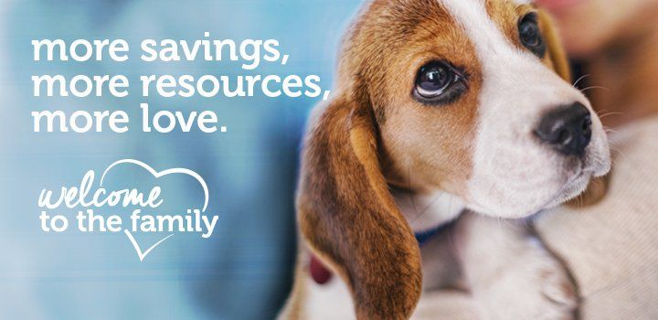 Petco Adoption Kit Beagle Dog Dogs Puppies Welcome To The Family