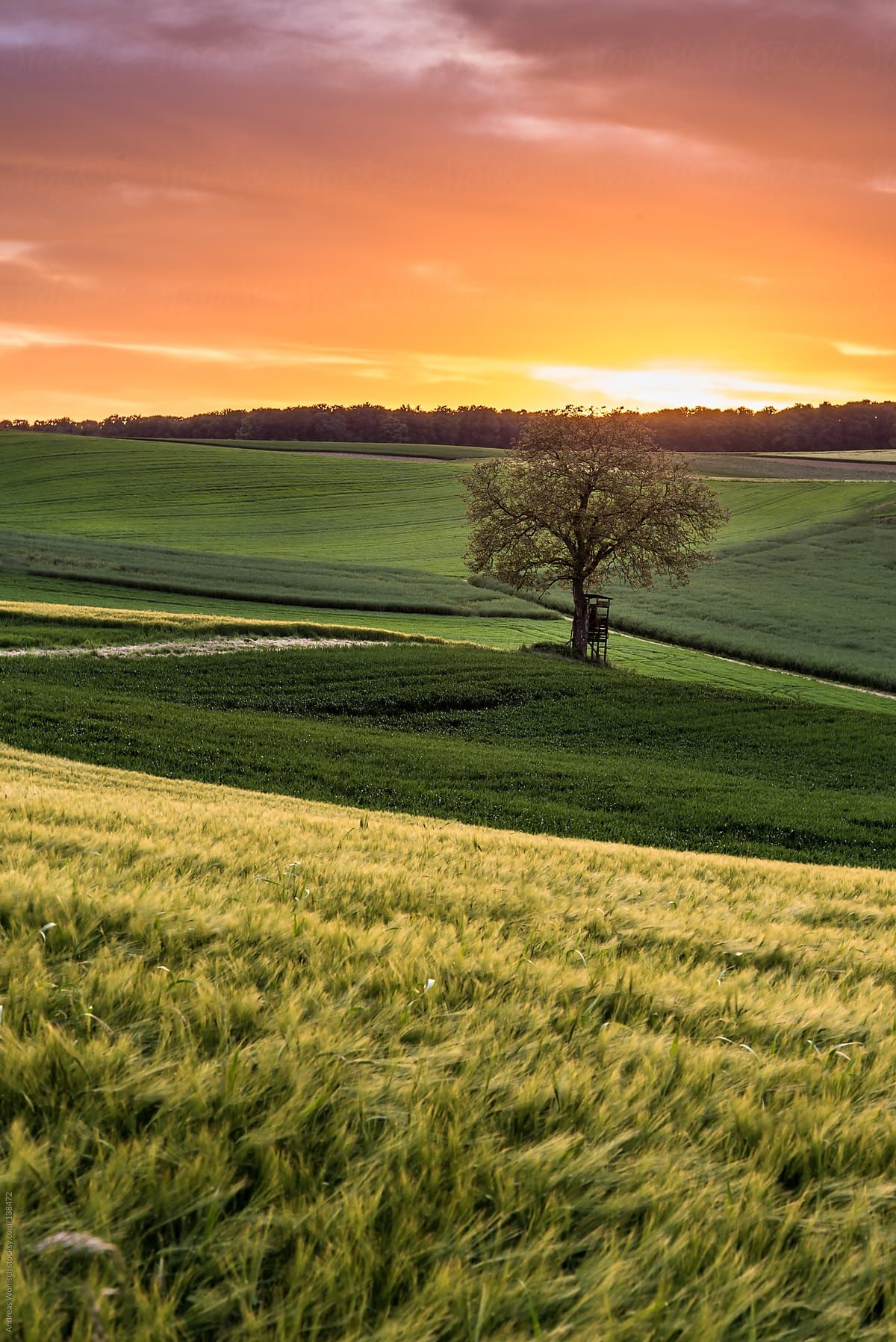 Tree With High Seat In Fields At Sunset Download This High Resolution Stock Photo Landscape Photography Nature Beautiful Landscape Wallpaper Nature Photography