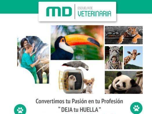 MasterD crea su Escuela de Veterinaria #masterd #veterinario