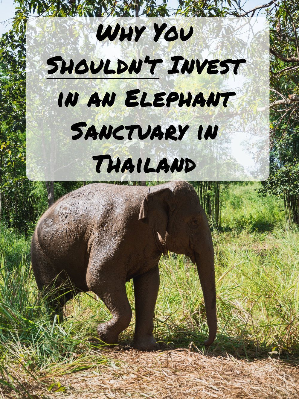 Why you should never invest in an elephant
