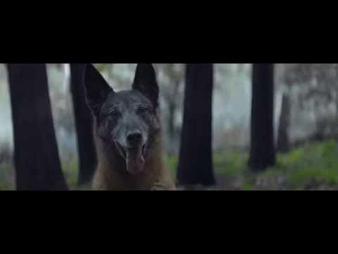 Fundação francesa da causa animal lança vídeo sobre abandono - YouTube