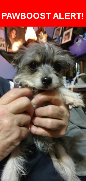 Is this your lost pet? Found in Green Bay, WI 54301  Please