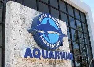 Free general admission to Clearwater Marine Aquarium and Winter's Dolphin Tale Adventure*; Discounts on Reciprocal Attraction Admission for Members.