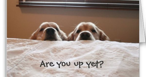 Greeting Cards   Golden Retrievers, Wake Up and Mornings