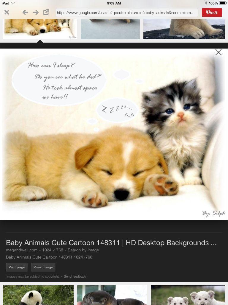 Popular Boo Chubby Adorable Dog - b947ab96b7d9d1a6e72e4b0e6b8ac597  Trends_378296  .jpg