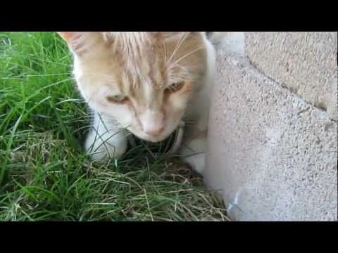"""https://t.co/bK7cxSlmnZ  Cat Cam Vlog #2 - Ninja Cat Fail http://img.youtube.com/vi/2KTDxJYjxSs/0.jpg *Today Special Deal*  EP. 2 Beau takes his cat cam outside for the first time and visits the neighbour. He's invited to play Ninja Cat with unexpected results. The cats now have their … *Today Special Deal* Please follow and like us:  var addthis_config =   url: """""""",  title: """""""""""