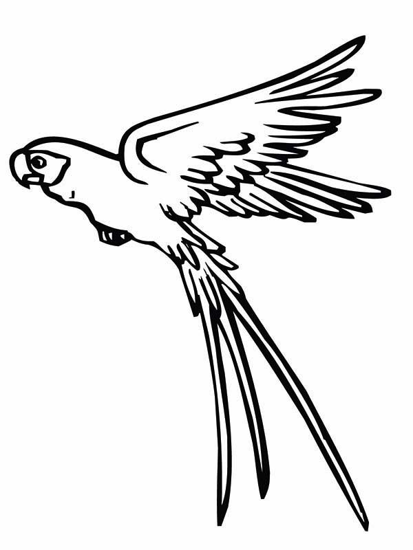 Parrot is Flying Coloring Page | coloring pages | Pinterest