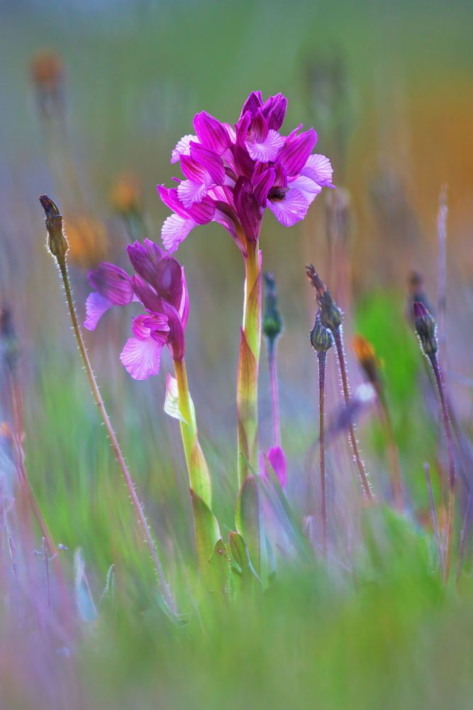 Simply spring by Cristian Vincis on 500px