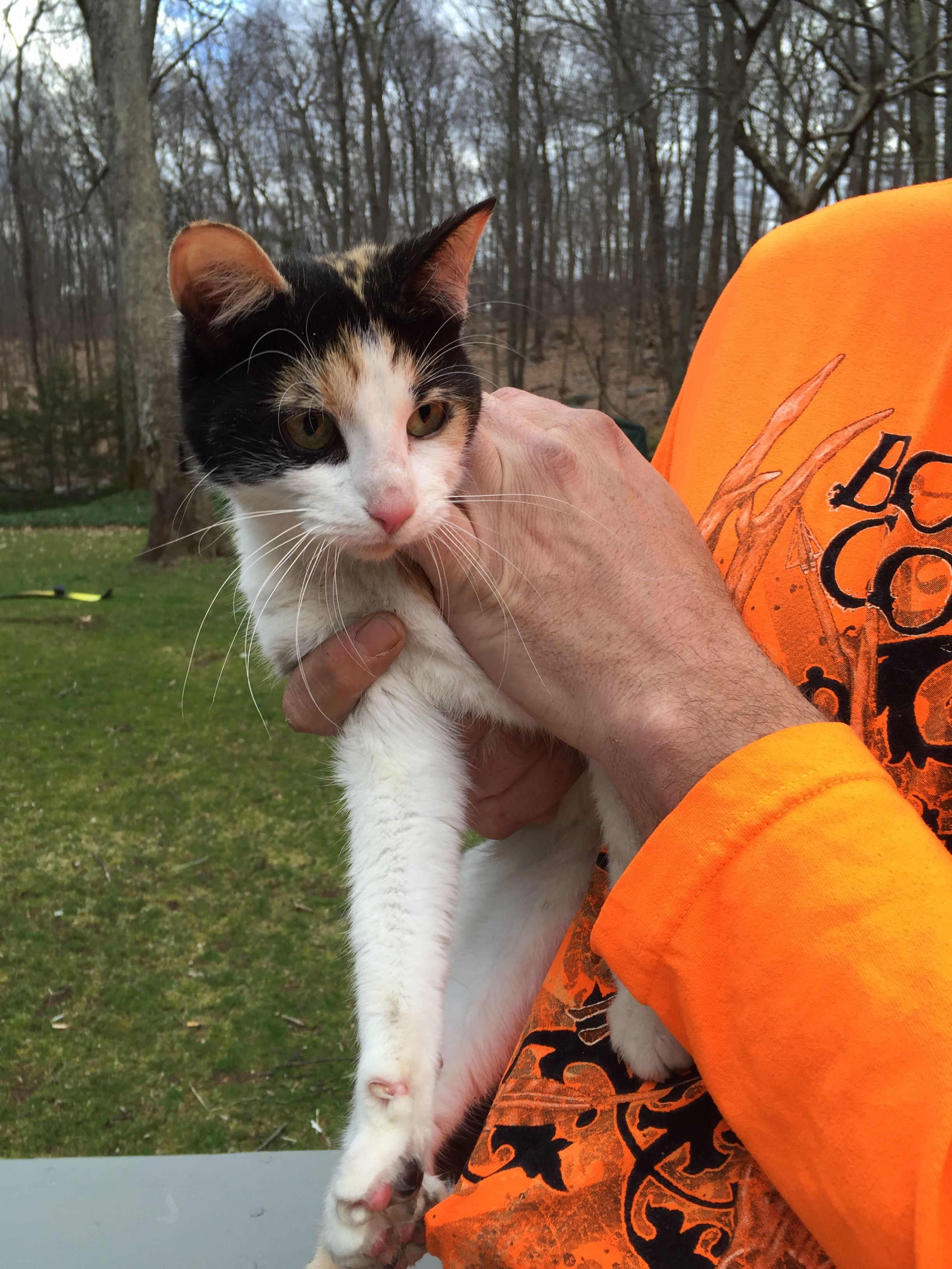 Found Cat Monroe,CT Connecticut Humane Society Found
