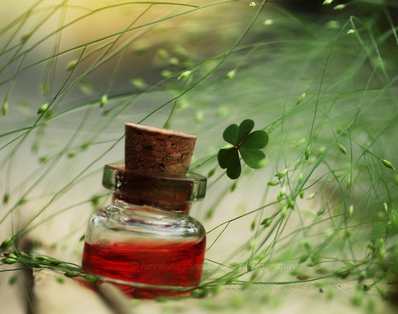 цветок в бутылочке макро: 11 тыс изображений найдено в ...