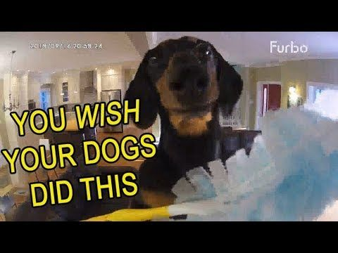 Funny Dogs Home Alone Caught On Furbo Dog Camera