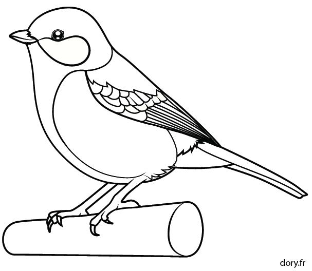 Ausmalbild Kohlmeise Kohlmeise Ausmalbild Vogel Malvorlagen