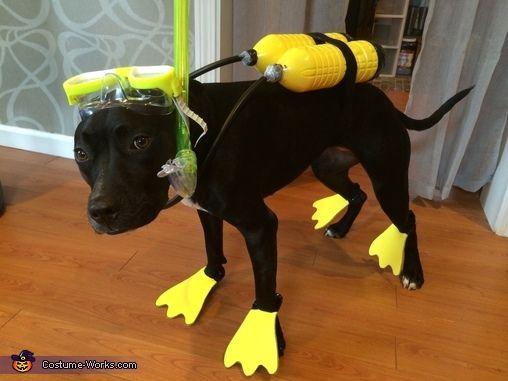 Scuba Dog Halloween Costume Contest At Costume Works Com Dog