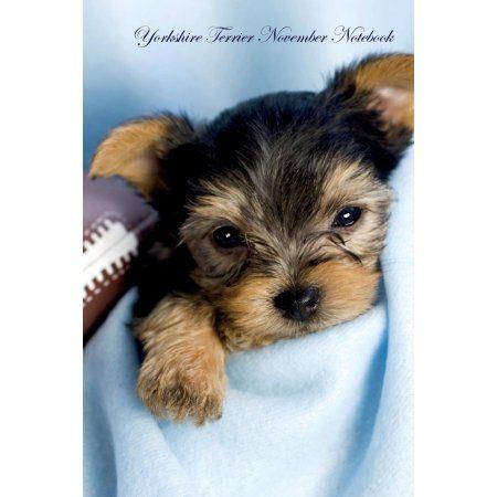 Yorkshire Terrier November Notebook Yorkshire Terrier Record Log