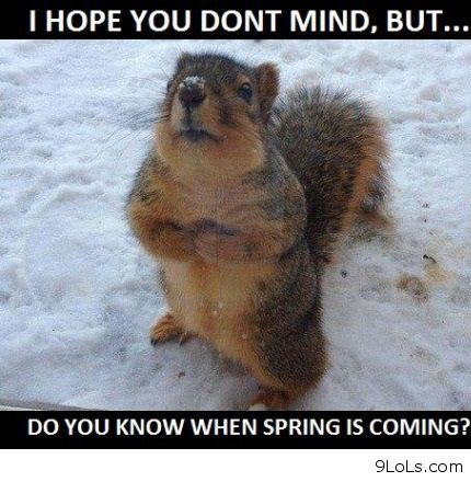 Cute Animal Sayings Google Search Spring Funny Animals Quotes