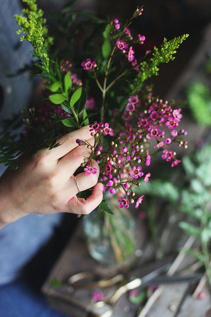 Love Waxflowers In Arrangements Comes Also In Light Pink