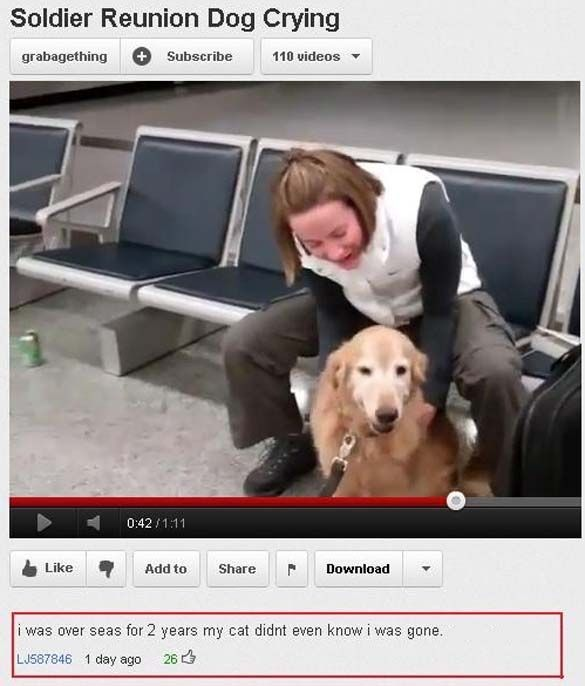 20 Best Youtube Comments Ever Dog Crying Funny Youtube