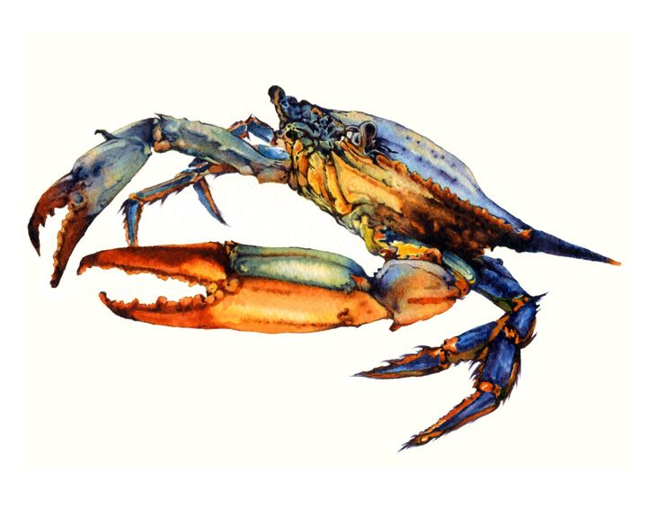 Blue Crab Crab Art Crab Painting Blue Crabs Art
