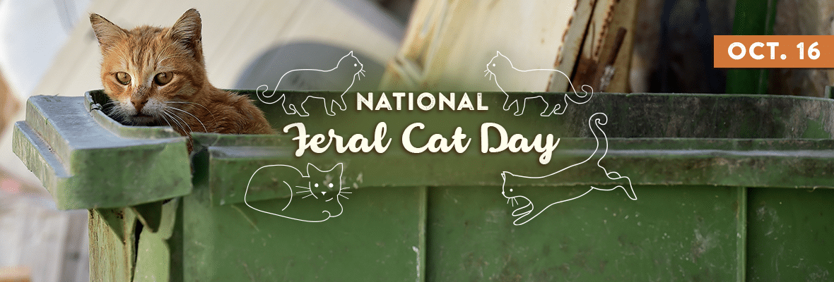 NATIONAL FERAL CAT DAY October 16, 2020 Cat day, Feral