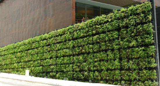 gr ne wand ideen wind sichtschutz terrasse garden. Black Bedroom Furniture Sets. Home Design Ideas