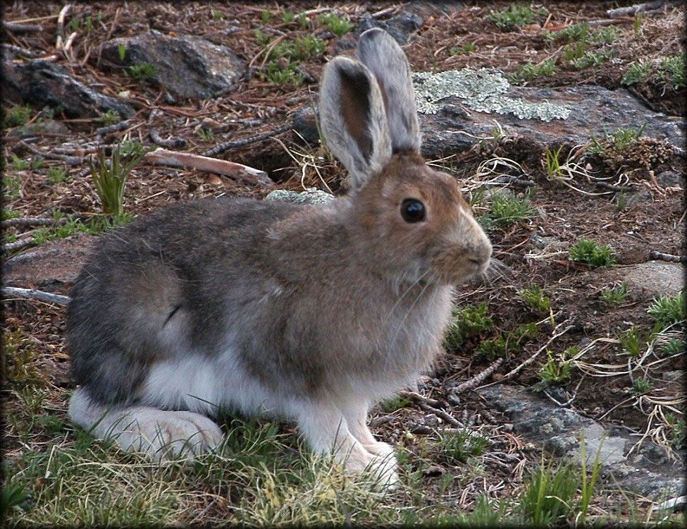 Coniferous Forest Animals and Plants | Coniferous Forest Animals ...