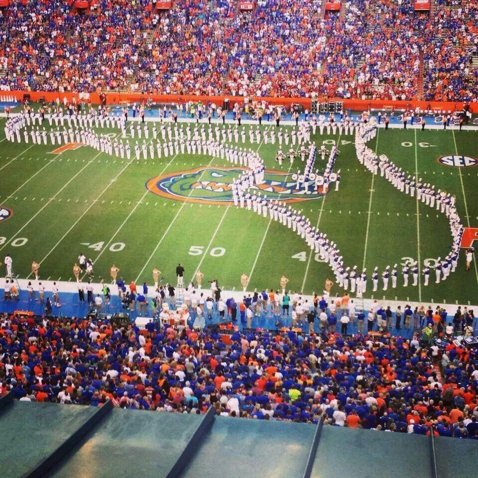 Florida Gators Gator nation, University of florida