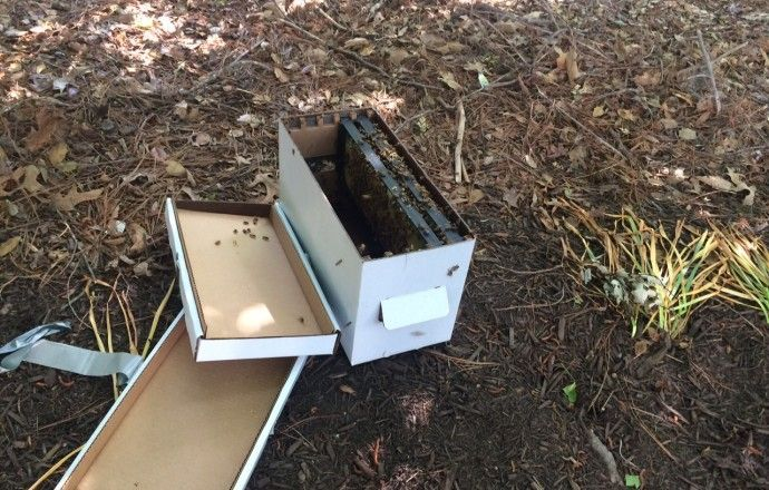 Bees  Transporting And Installing Nucs
