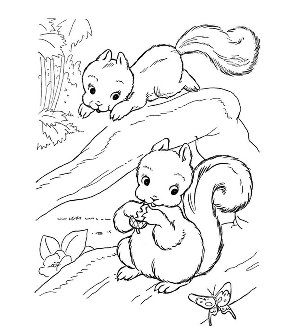 Squirrel Dieren Kleurplaten Gratis Kleurplaten Kleurboek
