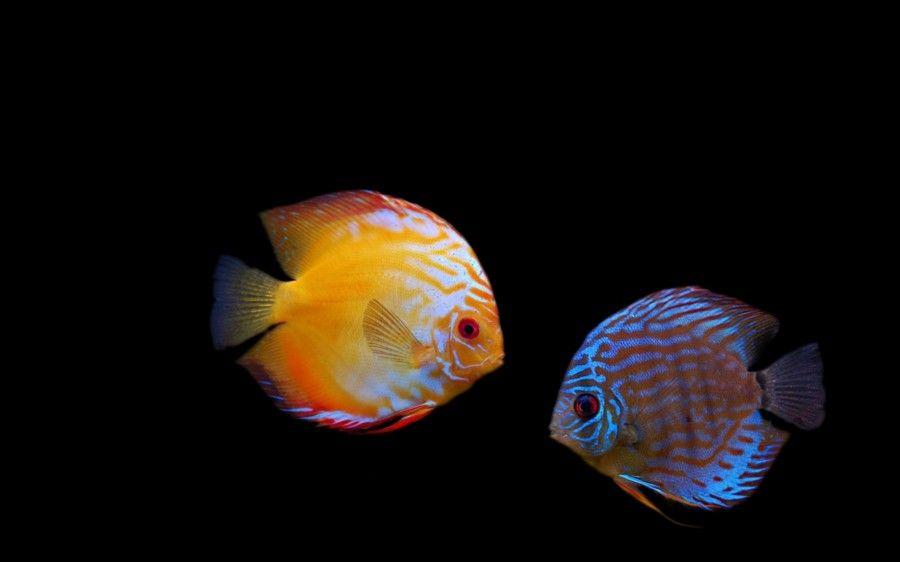 Tags Colorful Fish Photography Fish Wallpaper