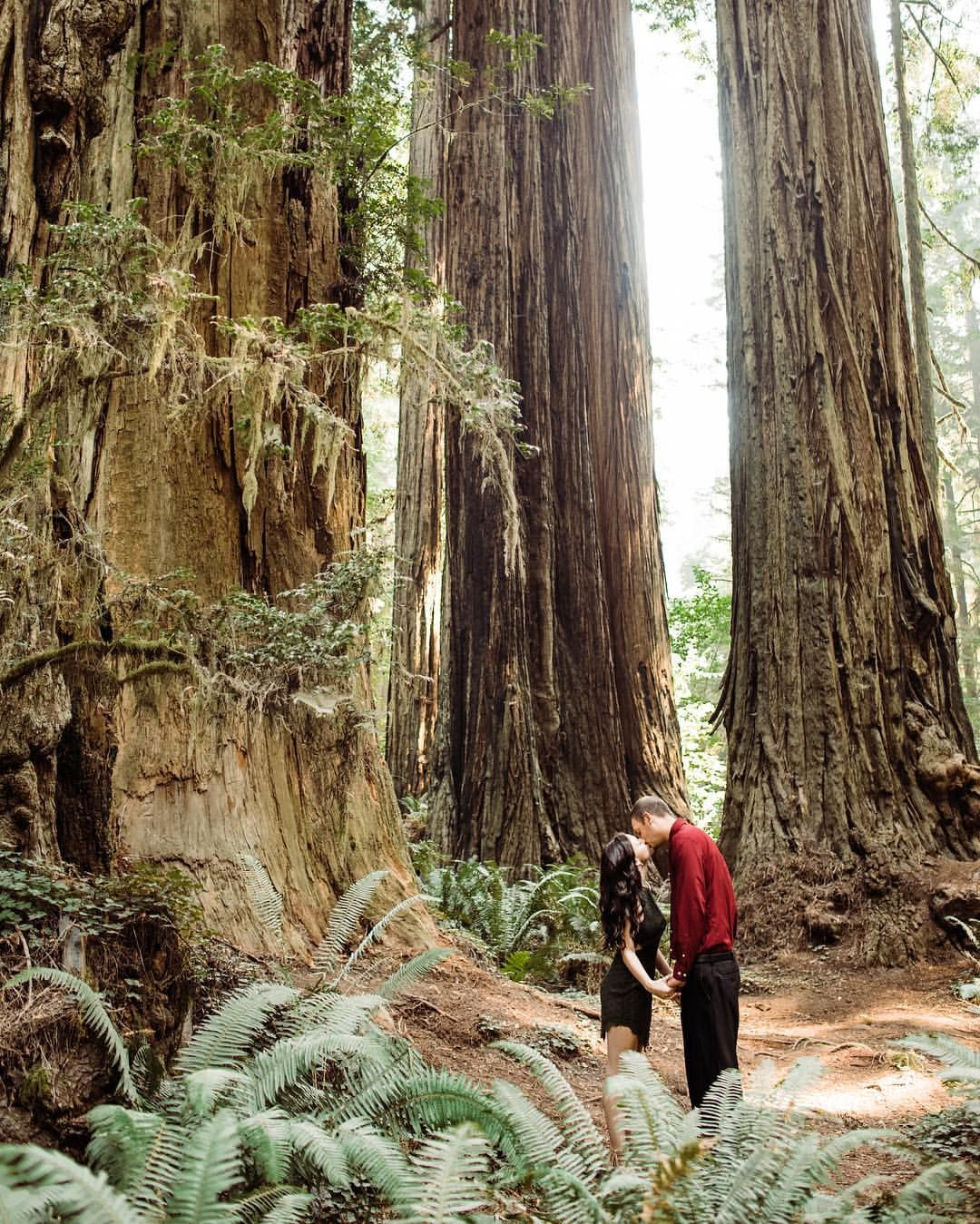 Pin by redwoods elopement hazel eye photography on redwood